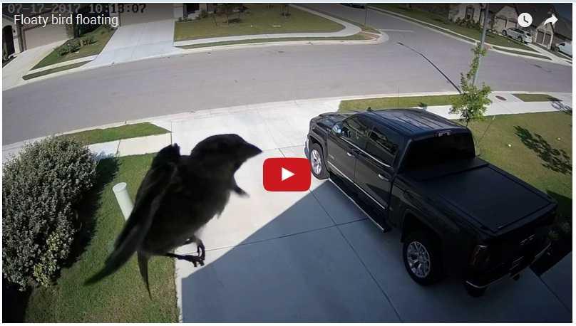 Esto es lo que pasa cuando grabas un pájaro