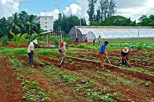 Felicita Raúl Castro a trabajadores de la Agricultura urbana y suburbana