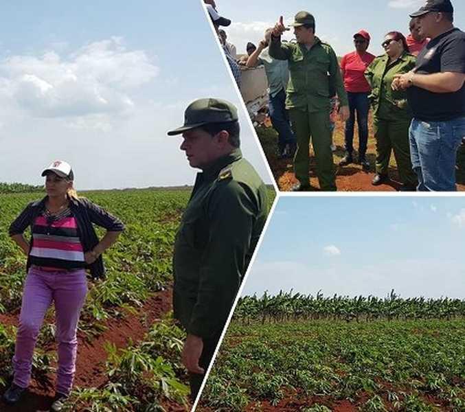 Consejo de Defensa de Camagüey chequea producción de alimentos en Sierra de Cubitas